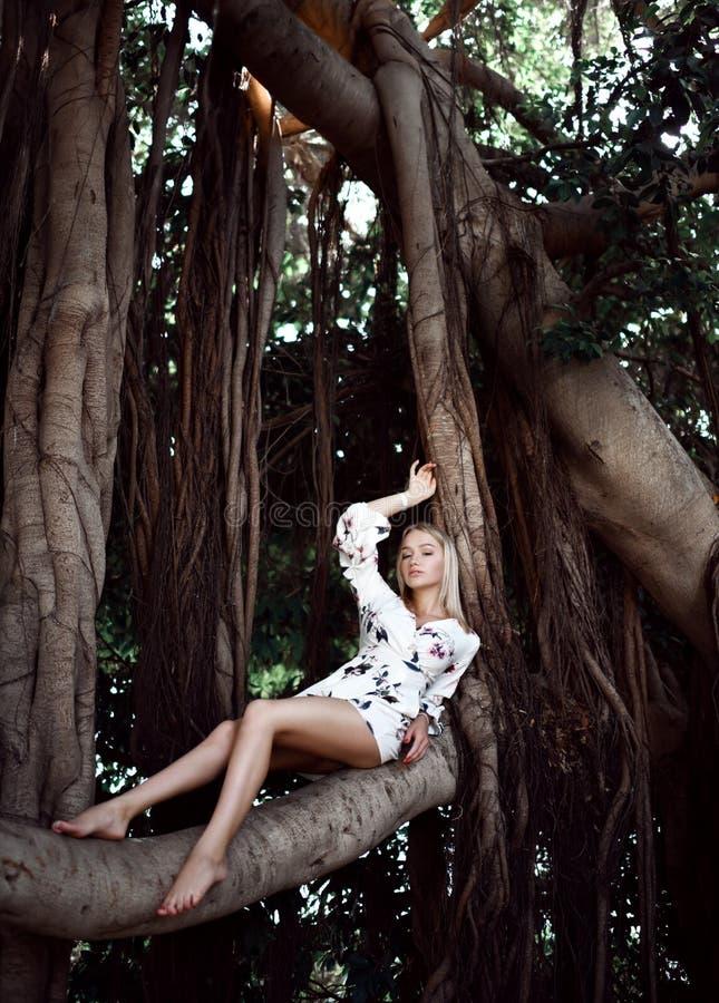 坐在与藤本植物的巨大的密林树的妇女在白色便服 免版税库存照片