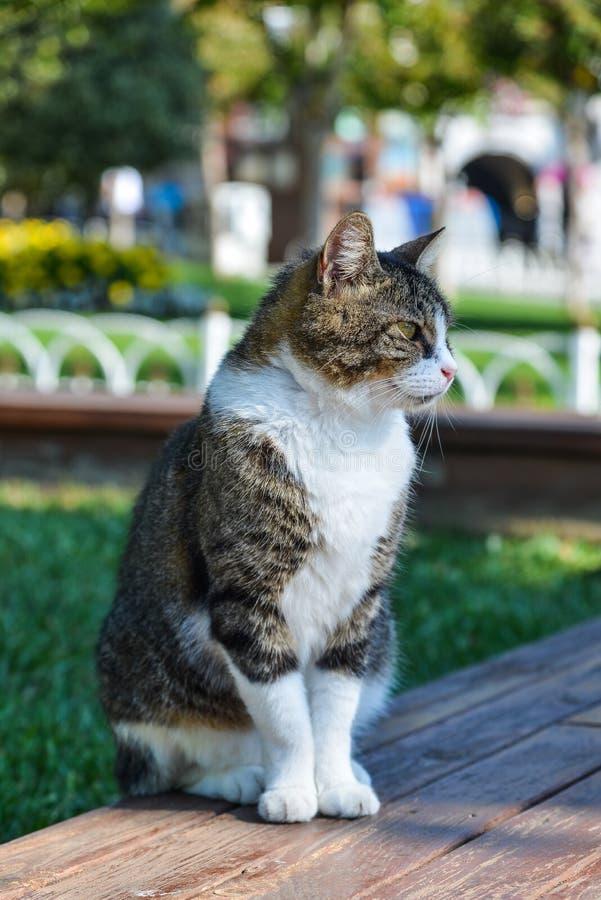 坐在公园的一只俏丽的猫 免版税库存图片