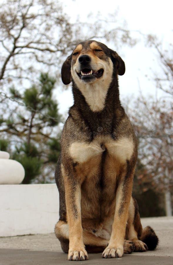 坐在公园的微笑的愉快的狗 动物动画片愉快的例证向量 年的狗标志 减速火箭的纵向 免版税库存图片