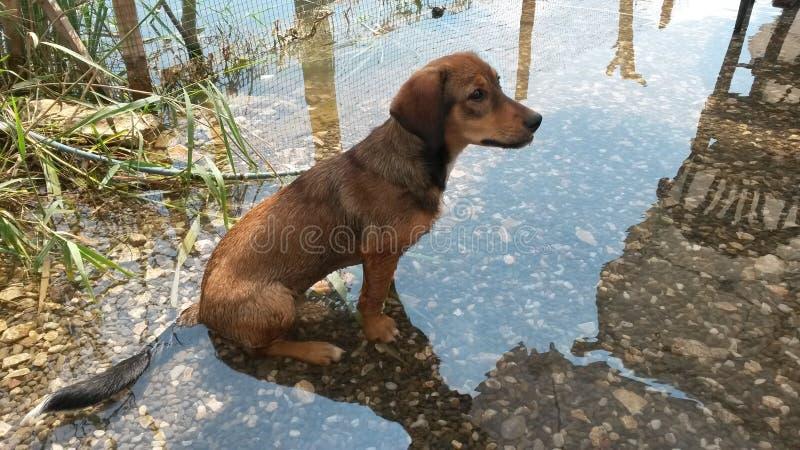 坐在冷水的小狗 库存图片