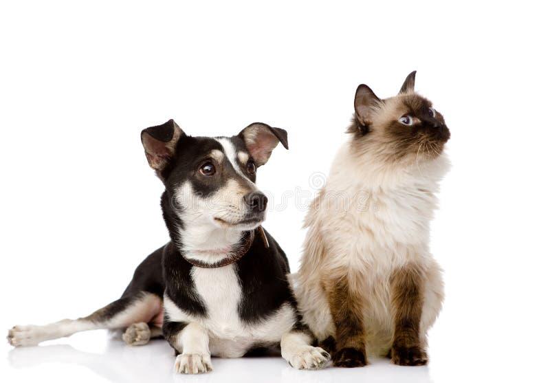坐在前面的猫和小狗 查找 查出在白色 免版税库存图片