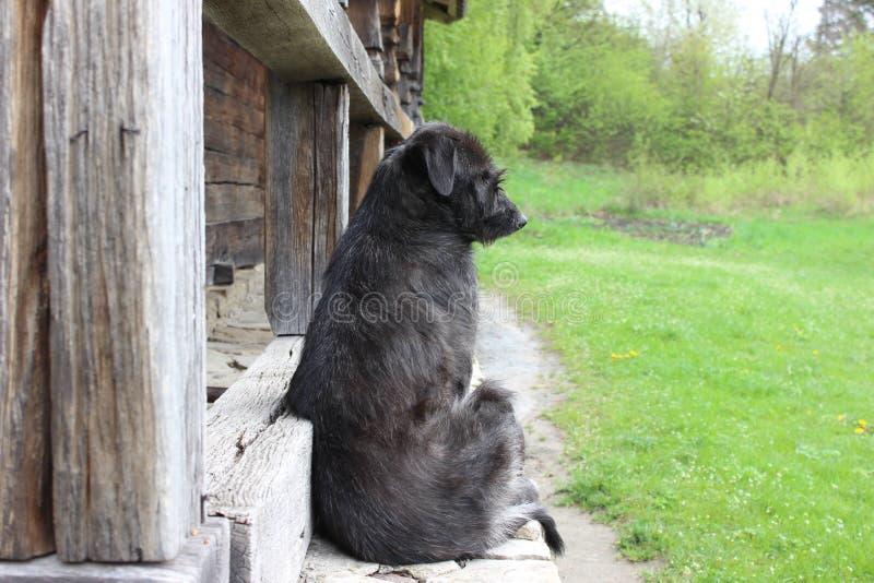 坐在古老木房子附近的孤独的黑老狗 免版税库存照片
