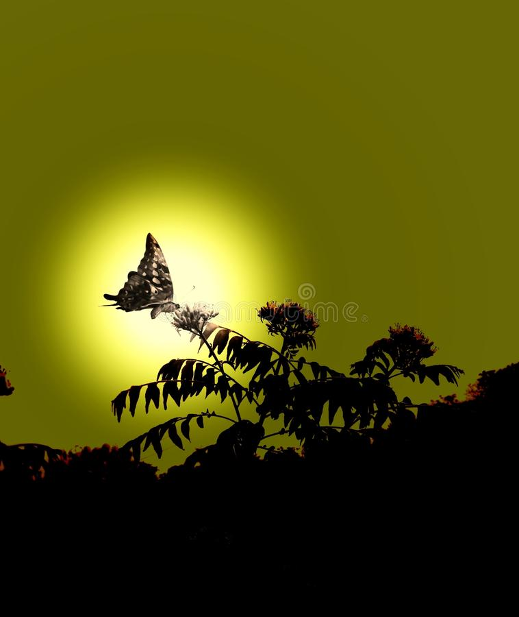 坐在叶子的蝴蝶 并且太阳来临 图库摄影