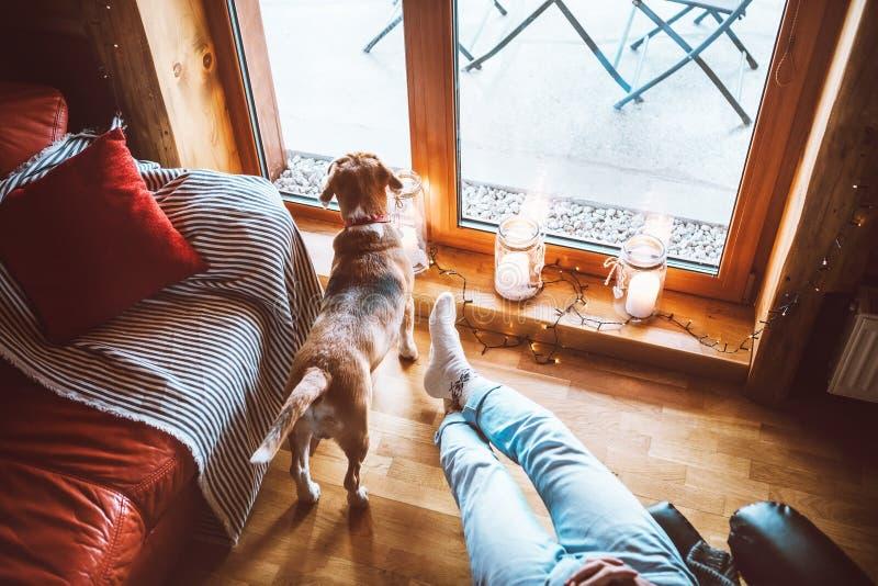 坐在大窗口在舒适国家家和他的观看在宽窗口里的小猎犬狗对面的舒适的椅子的人 乡下 免版税库存照片
