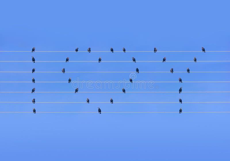 坐在导线的许多鸟以心脏和词的形式 库存图片
