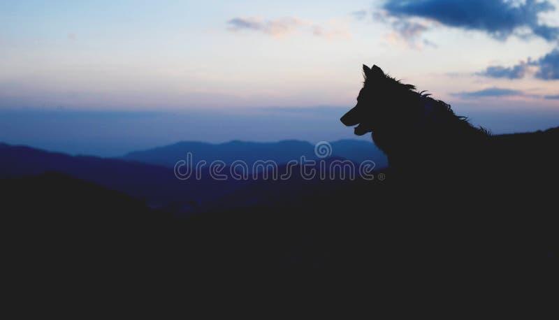 坐在小山的狗的剪影 博德牧羊犬纵向 免版税图库摄影