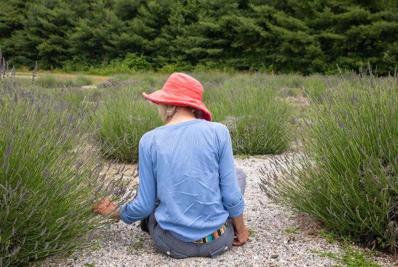 坐在庭院里的黑暗的桃红色帽子的苗条老妇人采摘淡紫色 免版税库存照片