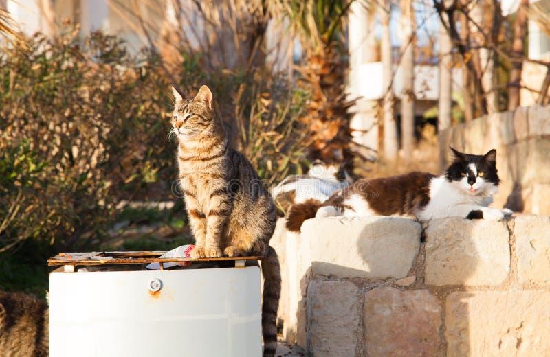 坐在日落的垃圾坦克附近的五颜六色的街道猫 免版税库存图片