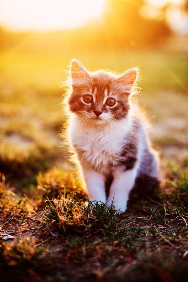 坐在明亮的太阳的小猫 免版税库存照片