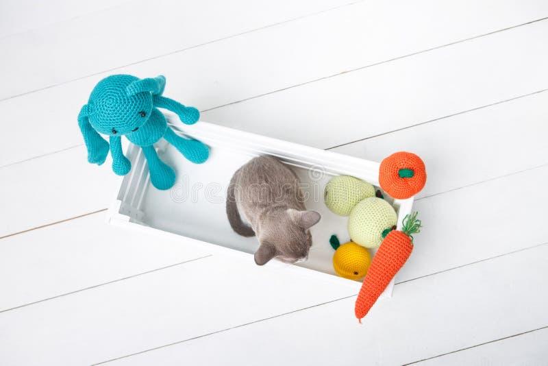 坐在有钩针编织的玩具的一个木箱的灰色缅甸小猫 顶视图 免版税库存照片