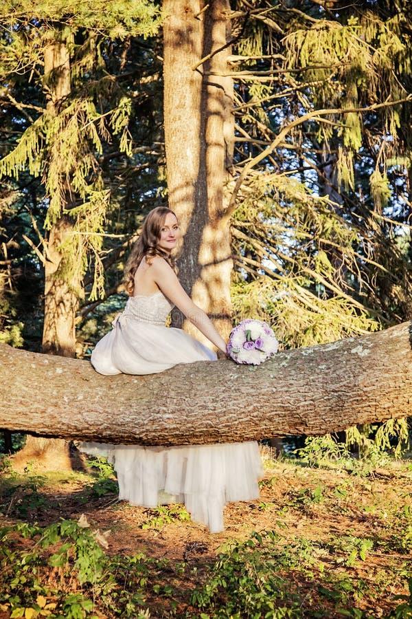 坐在树的新娘 库存图片