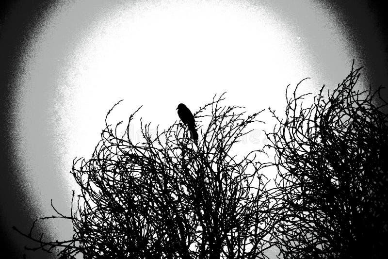 坐在树顶部的鹊 图库摄影