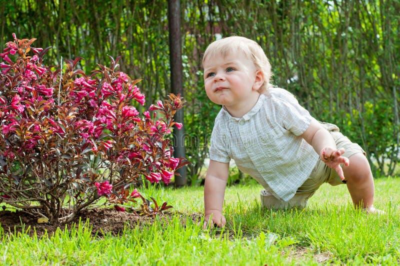 坐在桃红色灌木附近的男婴 库存图片