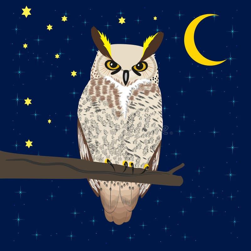 坐在森林的猫头鹰在月亮下 库存例证