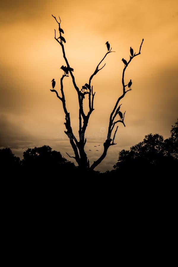 坐在死的树在日落,在剪影的树的雕 库存照片