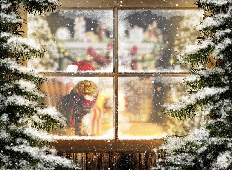 坐在窗口的圣诞节猫 免版税库存图片