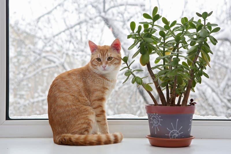 坐在窗口里的橙色猫 免版税库存图片