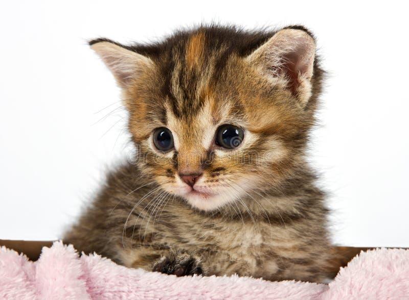 坐在篮子的小的猫 图库摄影
