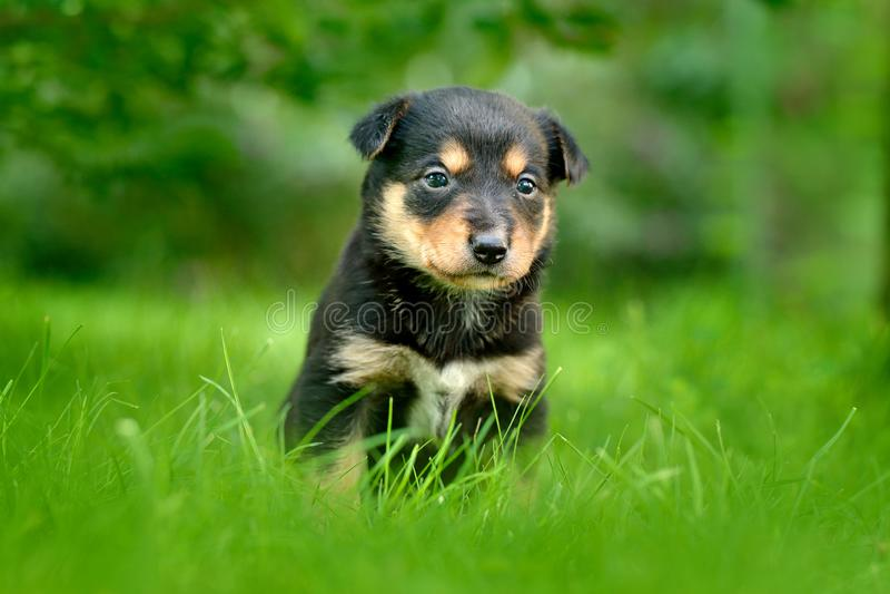 坐在绿草的逗人喜爱的狗小狗 动物在庭院里 没有母亲的不快乐的幼小崽狗 与技巧的小幼兽耳朵 免版税库存图片