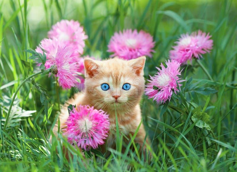 坐在花的小的小猫 免版税库存照片