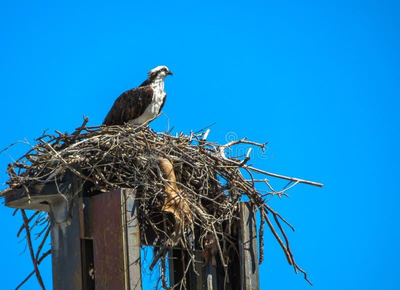 坐在铲车顶部的白鹭的羽毛 免版税图库摄影