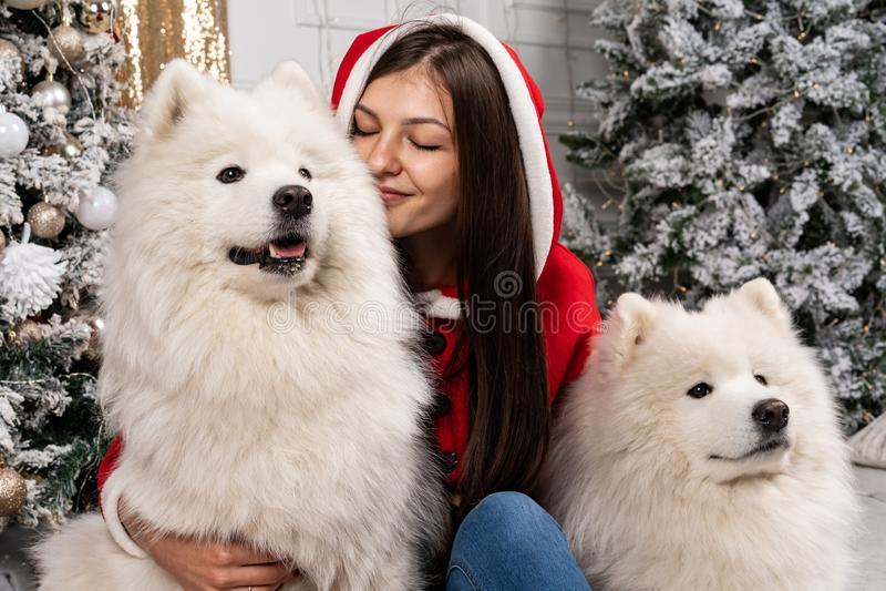 坐地面在圣诞树附近和拥抱白色狗的圣诞老人毛线衣的年轻逗人喜爱的女孩 免版税库存图片