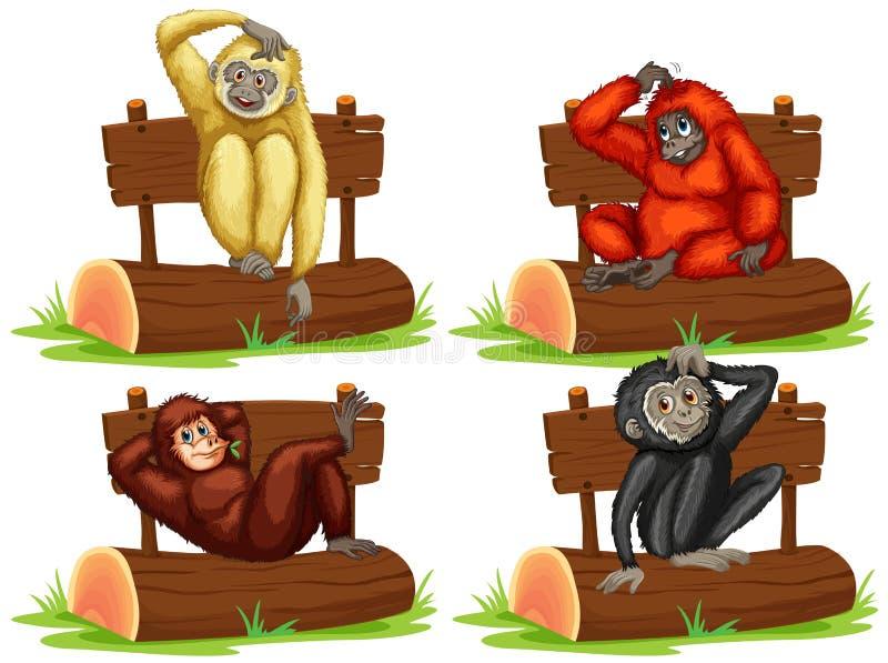 坐由标志的四只长臂猿 向量例证