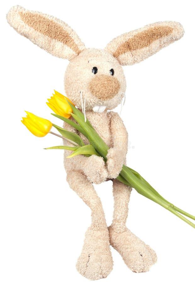 坐的复活节兔子 库存照片