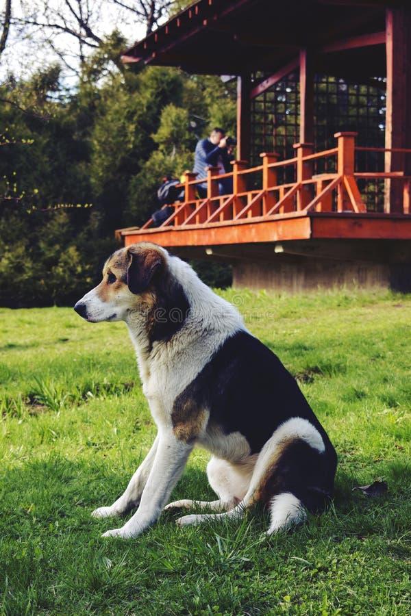 坐的狗在公园 库存照片