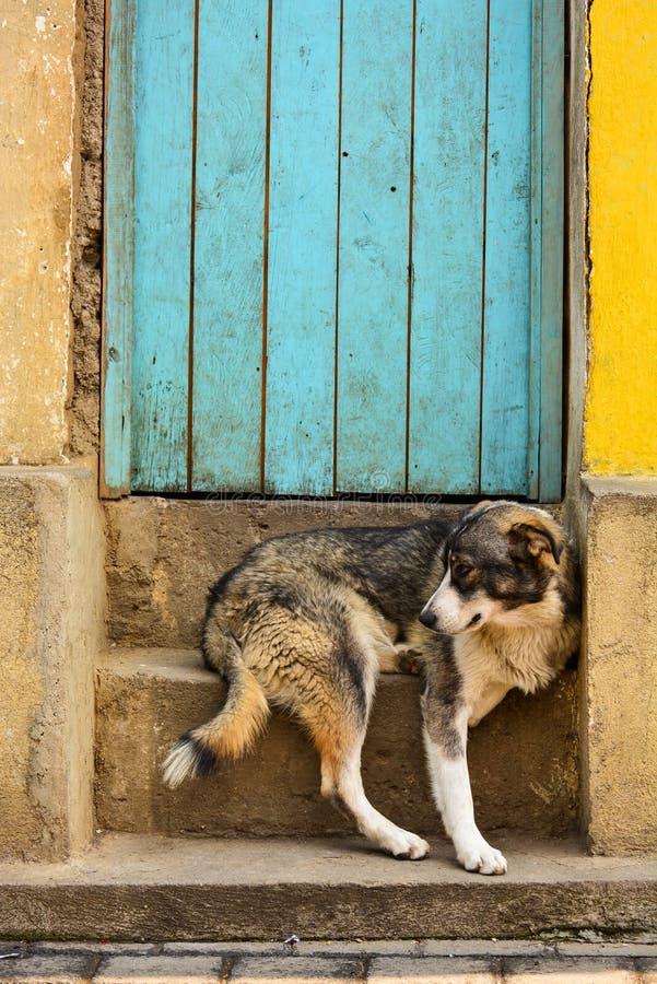 坐的狗外面,危地马拉 库存照片
