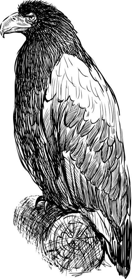 坐的老鹰 库存例证