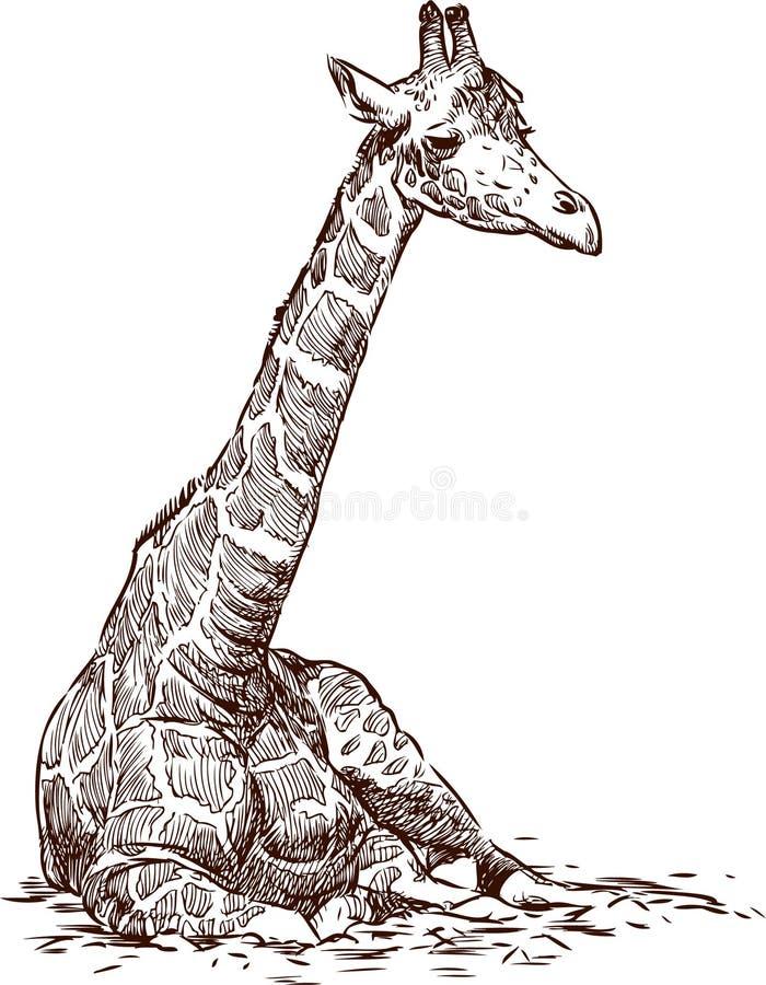 坐的长颈鹿 库存例证