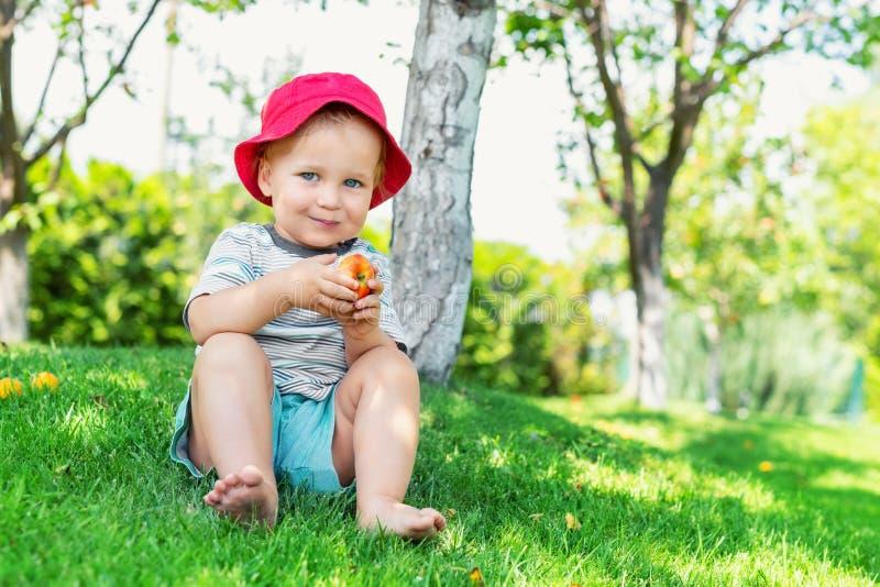 坐绿草和吃成熟水多的有机苹果的愉快的逗人喜爱的可爱的小孩男孩画象在果子庭院里在树下 免版税库存照片