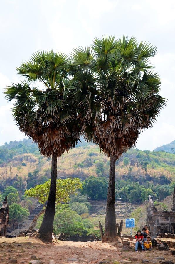 坐老挝的人民和在双树头梭flabellifer附近放松 库存图片