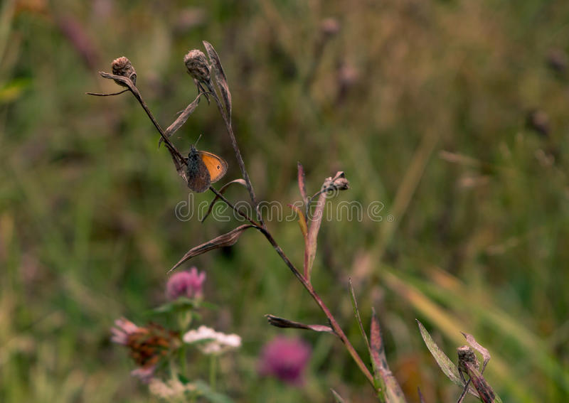 坐花的蝴蝶 免版税库存照片