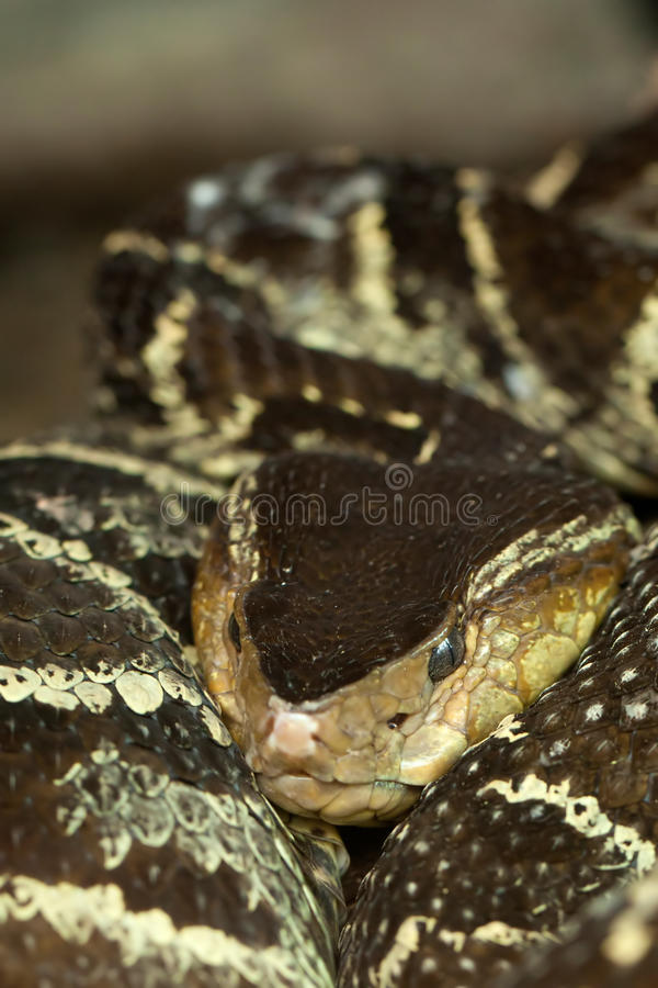 坑蛇蝎 免版税库存照片