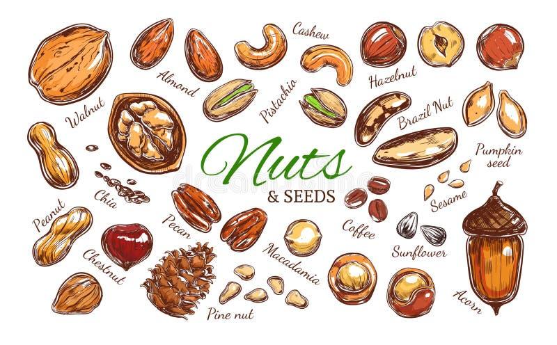 坚果和种子五颜六色的收藏 向量例证