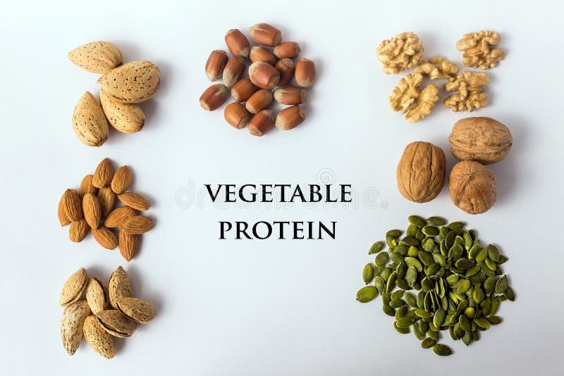 种子_坚果和种子的不同的类型 菜pr的一个充分的来源