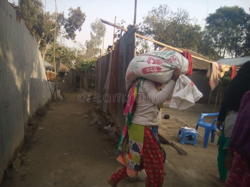 坚硬工作的孟加拉国的妇女 库存图片