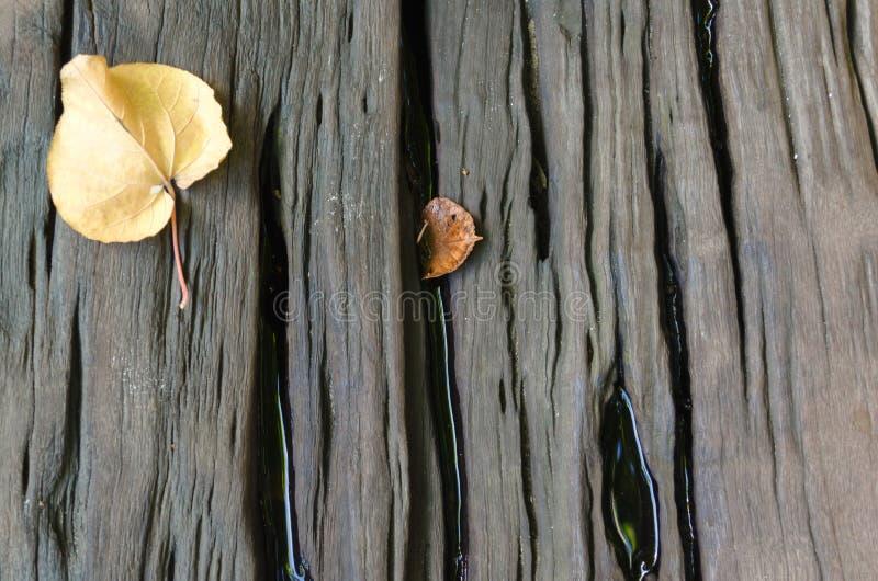 坚硬木头有叶子背景 免版税库存图片