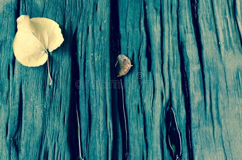 坚硬木头有叶子背景 库存照片