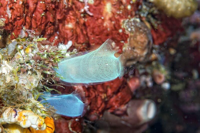 坚硬珊瑚宏观细节,当潜水在印度尼西亚时 免版税库存照片