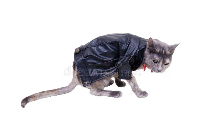 坚韧的猫 库存图片