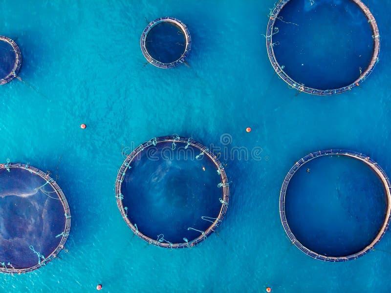 坦克的三文鱼渔场养殖和维护的,大海 r 库存照片