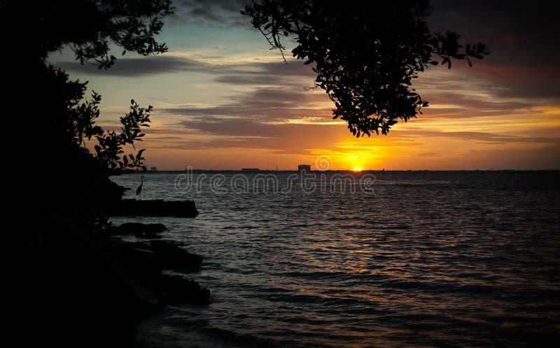 坦帕湾日出 库存图片