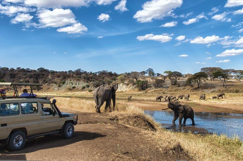 坦桑尼亚徒步旅行队 库存照片