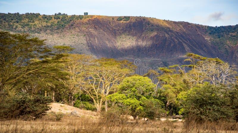 坦桑尼亚恩戈龙戈罗国家公园树线 免版税库存图片