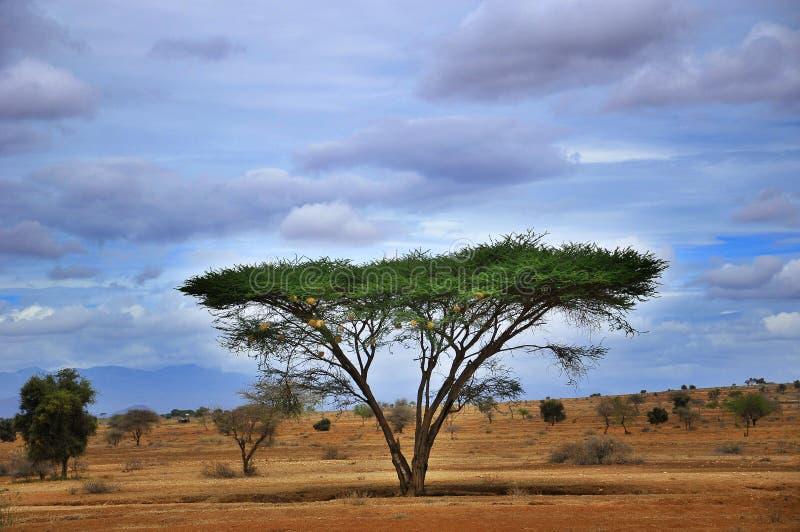 坦桑尼亚的风景 免版税库存照片