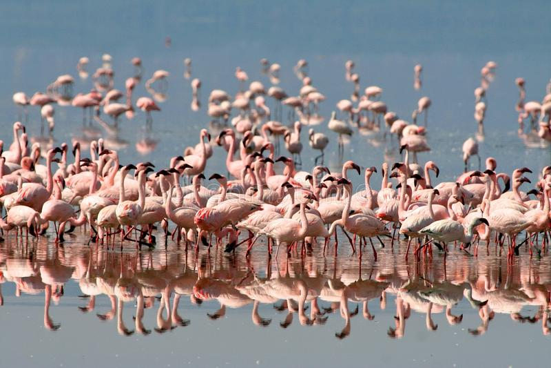 坦桑尼亚的鸟 免版税库存图片