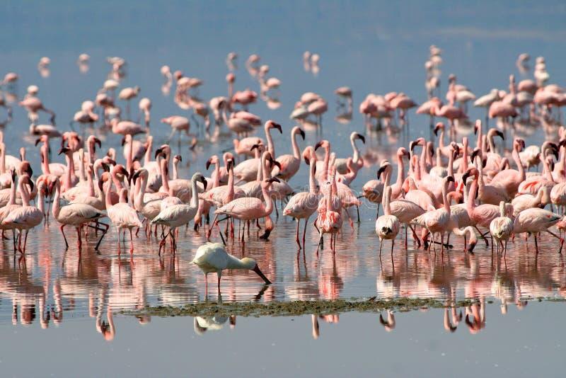 坦桑尼亚的鸟 免版税库存照片